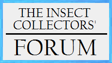 The_Insect_Collectors_Forum.png